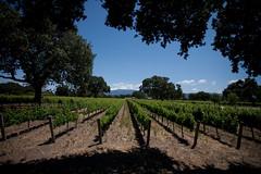 Santa Barbara - Wine