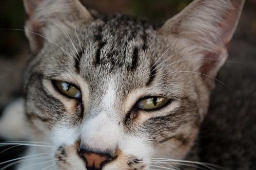 El gato del puerto (IV)
