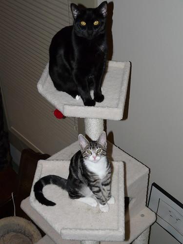 big brother gets top bunk