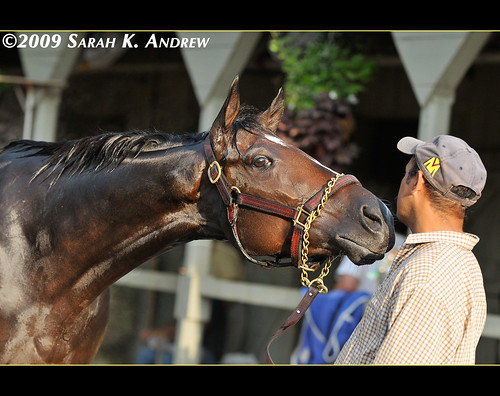 Rachel Alexandra wants a smooch
