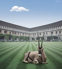 In the Garden ! (Ben Heine) Tags: uk windows wallpaper england cloud house building art college grass lines composite architecture composition contrast photomanipulation garden print poster relax carpet weird university oldstyle modernart surrealism lawn perspective jardin horns surreal compo nikond70s clean oxford antelope photomontage wildanimal serene savannah copyrights maison depth btiment bizarre onyx antilope masterpiece flore lierre nationalgeographic couch fentres sauvage faune propre herbes profondeur gazon cornes compositephotos classicphoto incongruit crazyheart flickrunitedaward infotheartisterycom