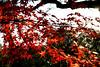 Photo:Mukojima Hyakkaen Autumn Leaves - 05 By
