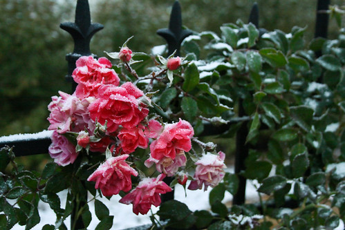 First snow in the garden