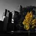October 13th: Autumn Yellow