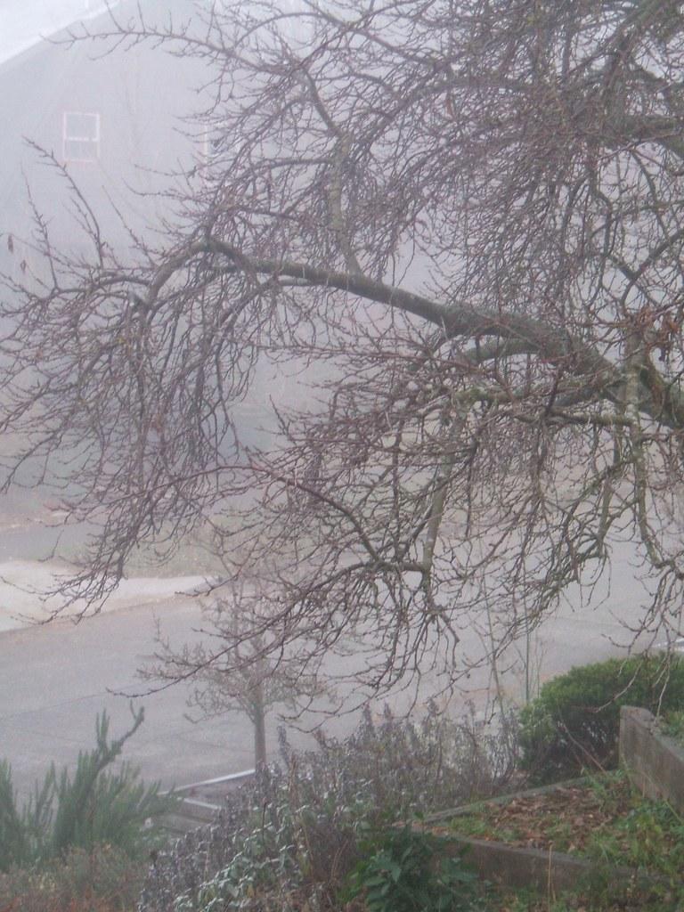 Plum tree in winter fog