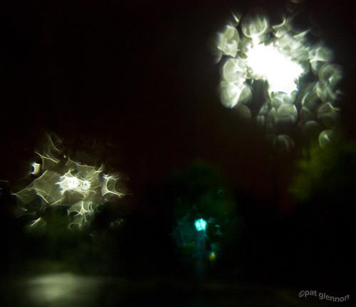 170/365 v2.0 (by Pat Glennon)