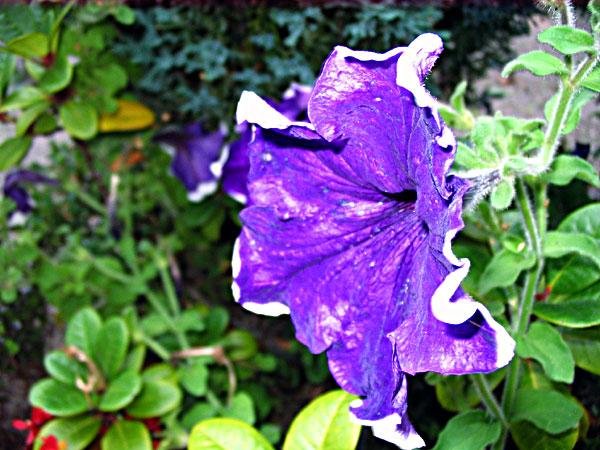 Amazing Color. Photo: Ulla Hennig