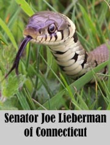 Joelieberman