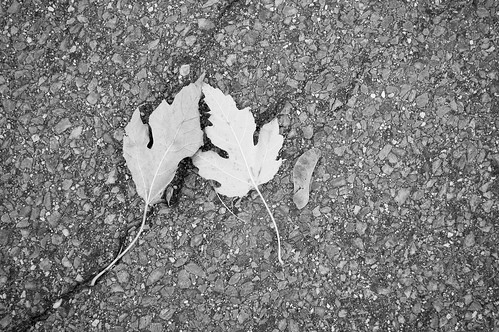 A Little Leaf Family