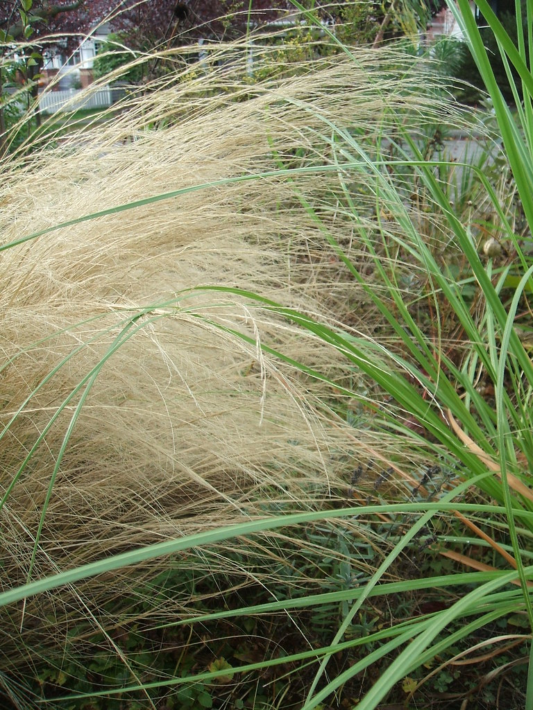 Groovy grasses