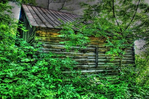 Cabin in the Misty Wood