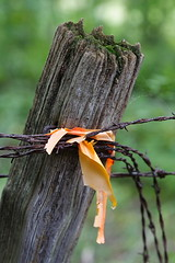 Barbed Wire 04