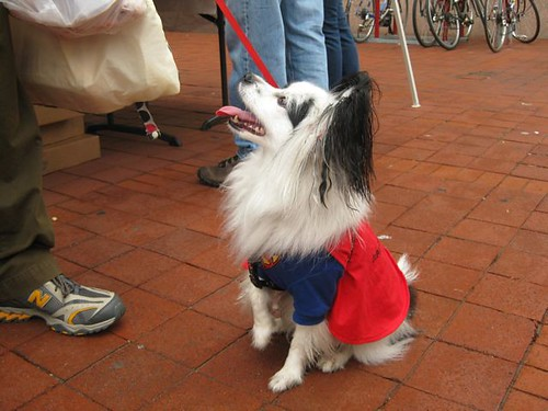 Bake Sale - Superdog