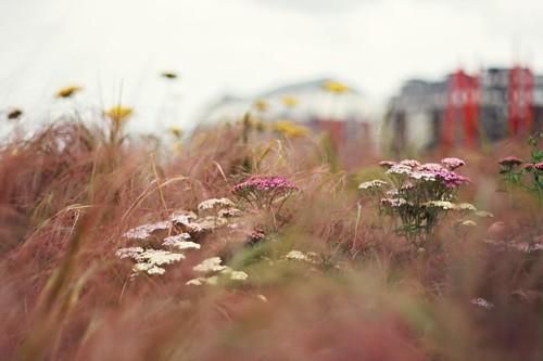 Scott Kelby's Worldwide PhotoWalk - Dublin