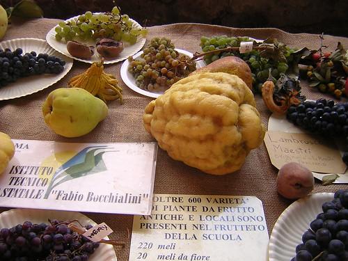 Guastalla, biodiversità
