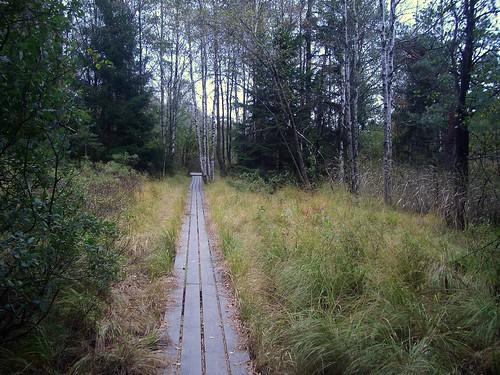 Spång @ Gallhålans naturreservat
