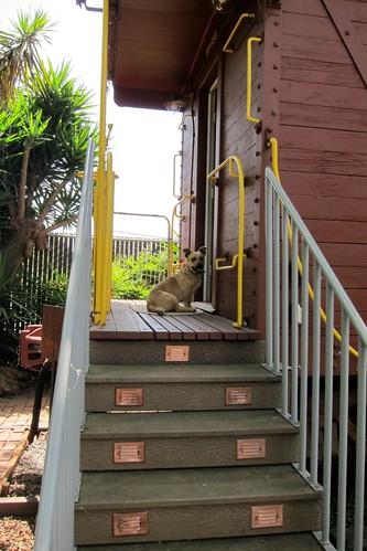 Gilroy dog on WP668 Caboose