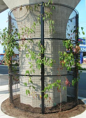 Plant climbing frame