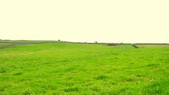 Topside of field