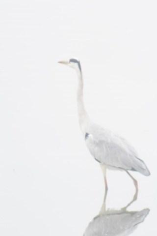 Swan Lake by LOVEducation