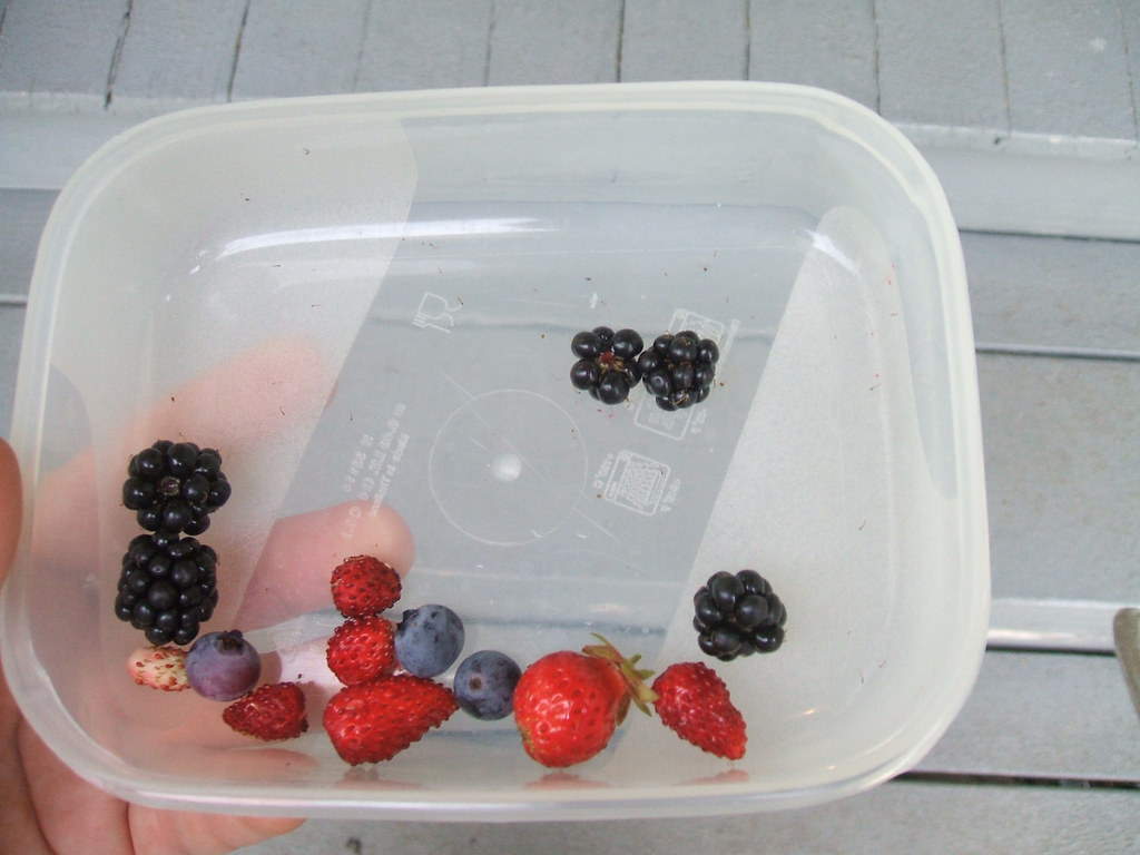 Ridiculously paltry berry haul