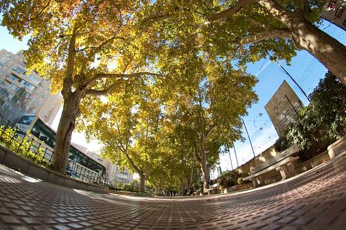 Paseo bajo los árboles