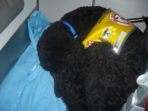 Yankee op een bolletje in de cabine van het vliegtuig