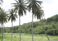 Manenggon Valley