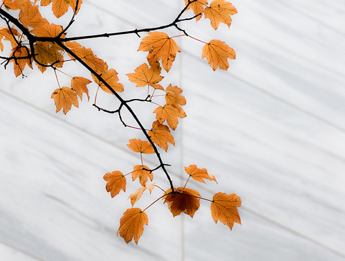 Unclarity Orange Blend