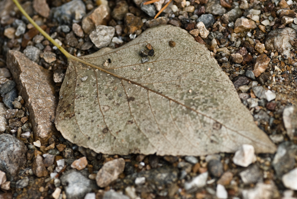 leaf and pebbles