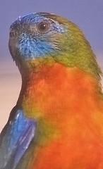 bird25