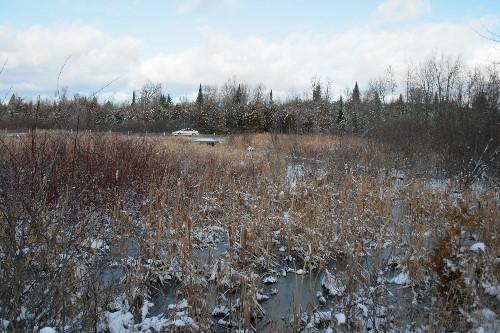 marsh beside Highway 7