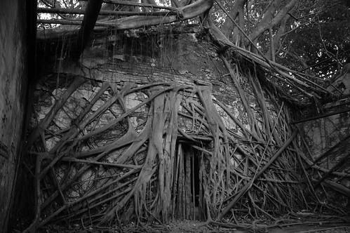 Tainan Banyan Tree