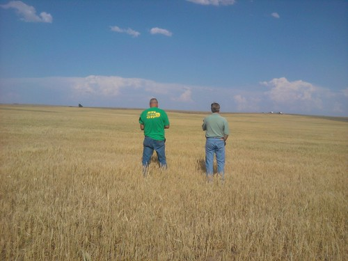Cell phone photo: Okla. wheat