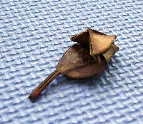 leaf origami dipper