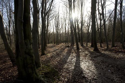 Lullingstone woods