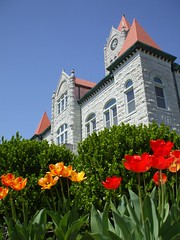 Courthouse tulips