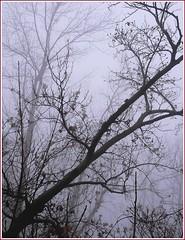 Nebelspaziergang