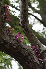 Flowers growing from tree bark 2