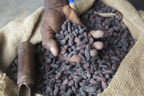 Dried cocoa beans in farmers hand