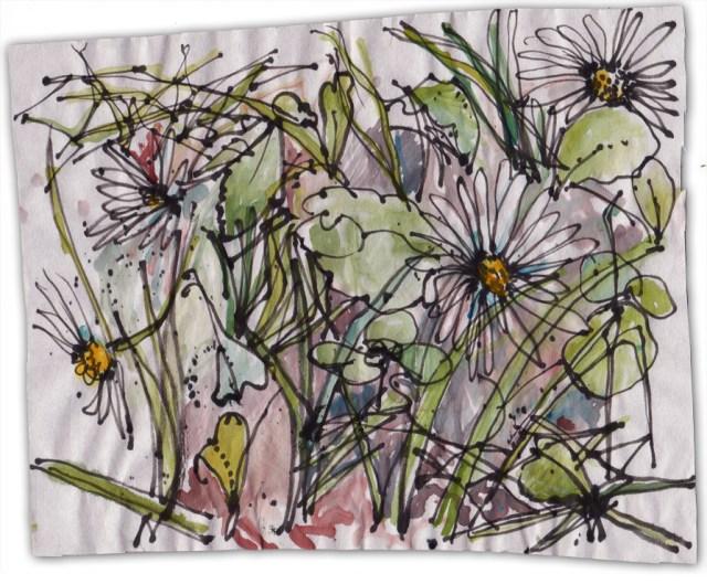 square decimetre of lawn with daisies