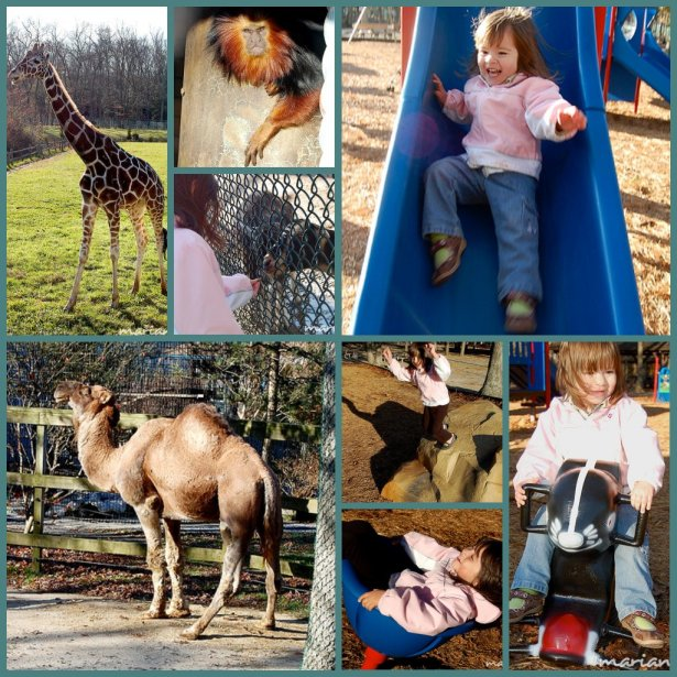 Cape May Zoo collage