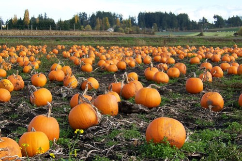 Pumpkin Patch 100_9296 by Kam