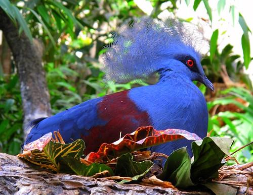 Blue plumage