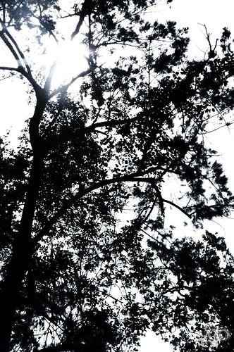 treelogo