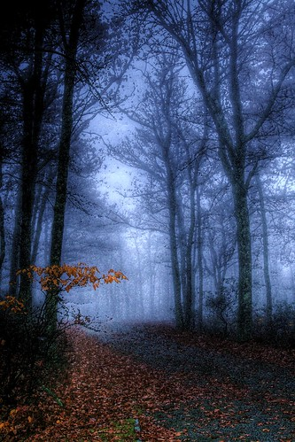 Ghost in the Mist