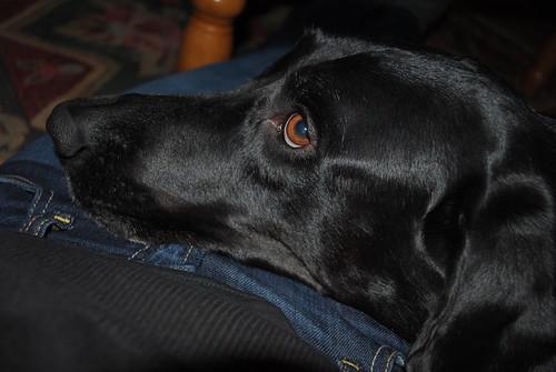 [35/365] Nico the Friendly Dog
