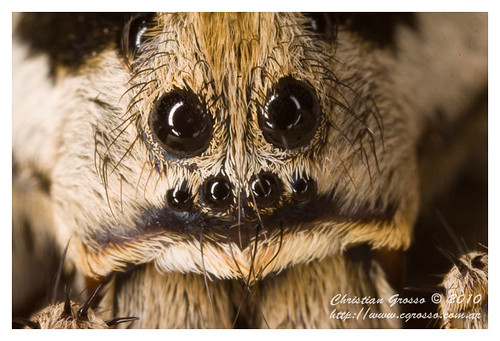 """Araña • <a style=""""font-size:0.8em;"""" href=""""http://www.flickr.com/photos/20681585@N05/4517702541/"""" target=""""_blank"""">View on Flickr</a>"""