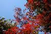 Photo:Mukojima Hyakkaen Autumn Leaves - 06 By