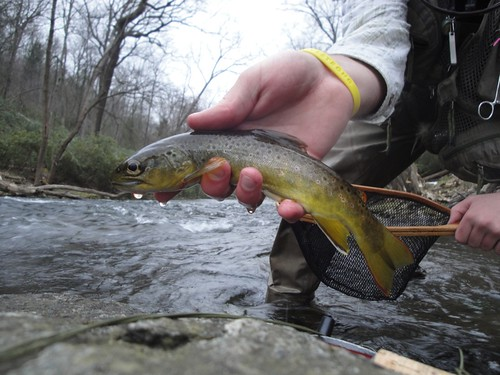 March Brown Trout